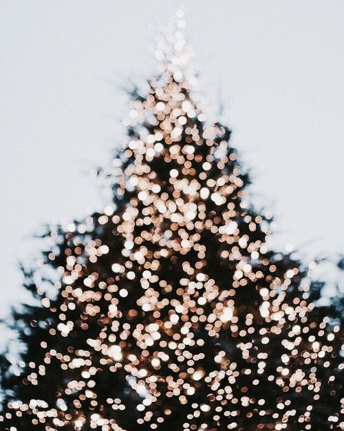 christmas tree glory