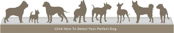 Use the Dog Breed Selector to find out which Dog will fit your lifestyle.