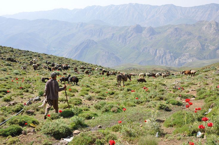 Afghan herdman on Mount Damavand