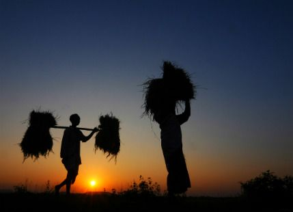 Well distributed Monsoon rainfall to benefit Kharif crops -