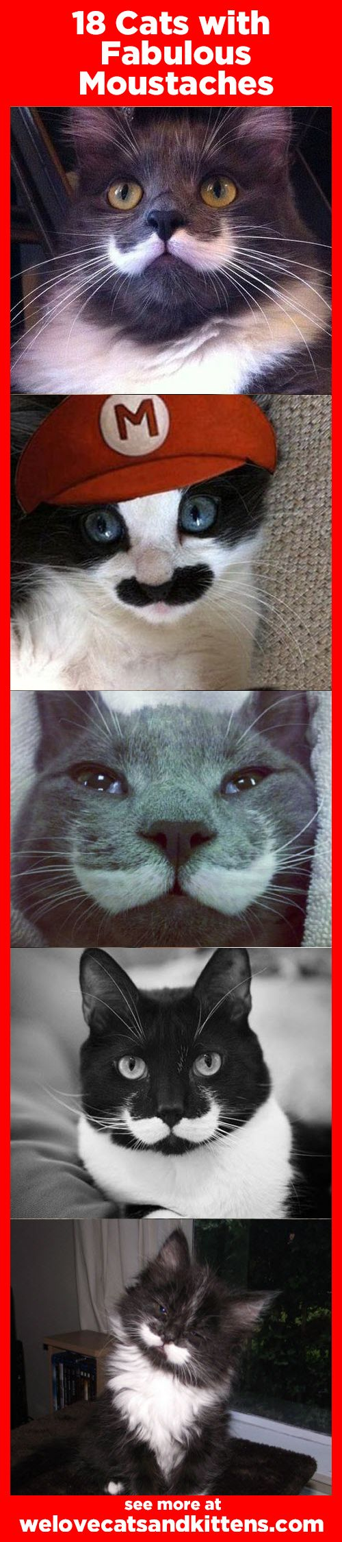 18 cats with fabulous moustaches.