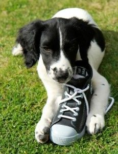 Does My Pet Need Shoes?