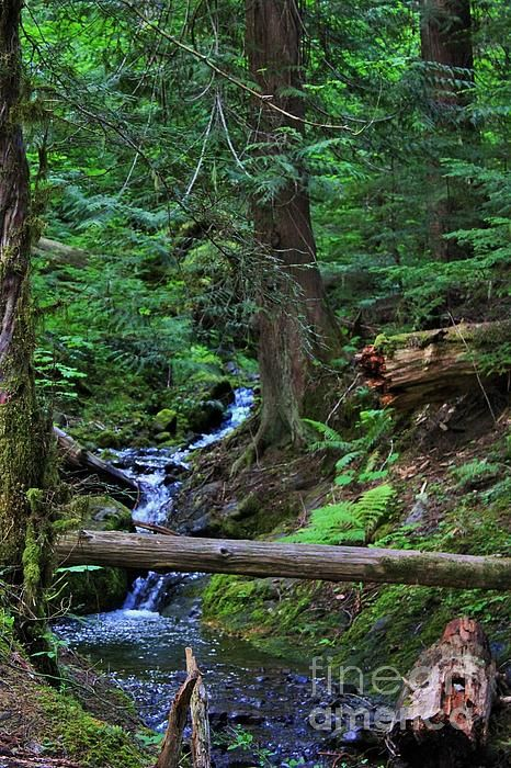 Pacific Northwest Images