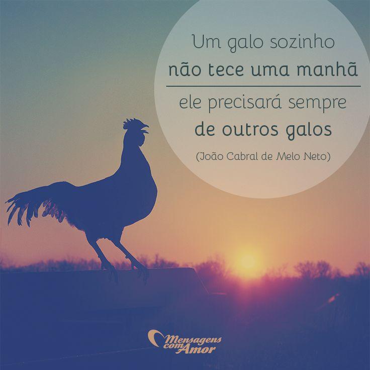 Um galo sozinho não tece uma manhã... #mensagenscomamor #frases #reflexões #JoãoCabral
