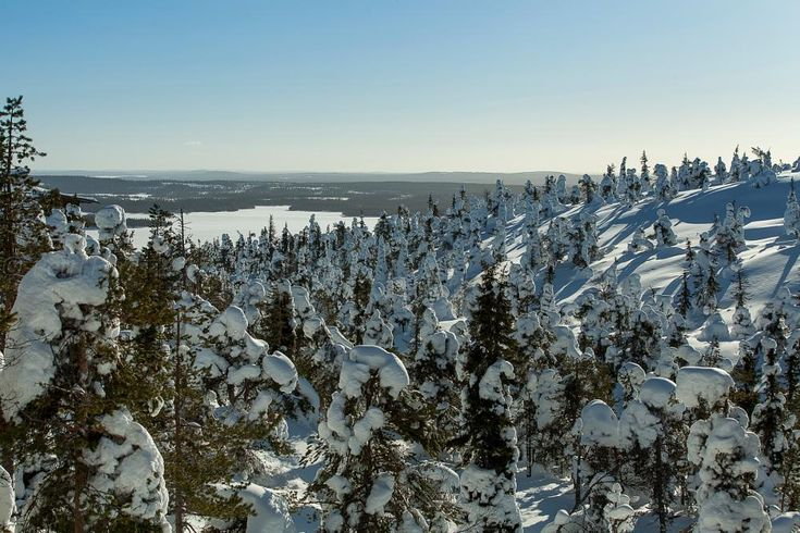 A snowy landscape by Petri Forss