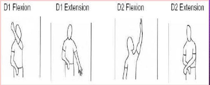 Pnf D1 D2 Flexion Extension Ot Board Exam Study Tools