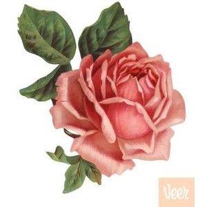 die cut roses   ... Illustration: VLI0011070 - Victorian Die Cut Illustration of Pink Rose