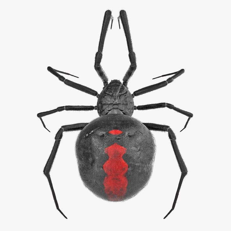 how to draw a 3d black widow spider
