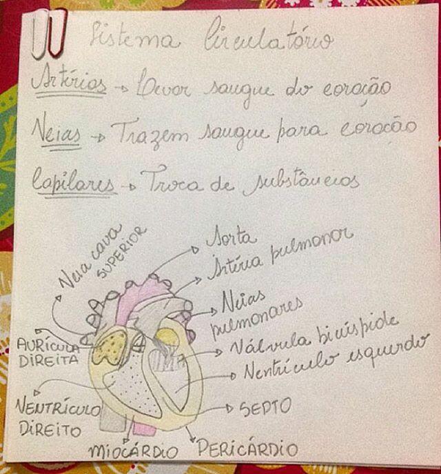 Biologia - Sistema circulatório #medicadivabiologia Via: @_vestmedi ❤️