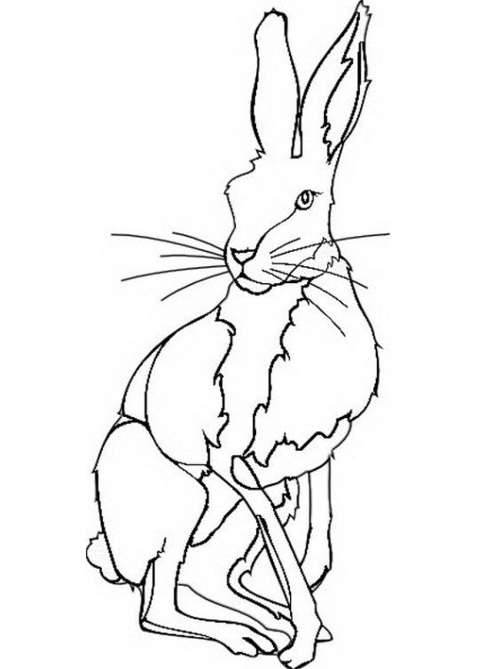 pin von coloring pages forkids auf rabbit coloring pages