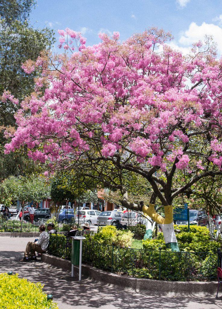 Árbol de Arupo Dolores park, Park, Travel