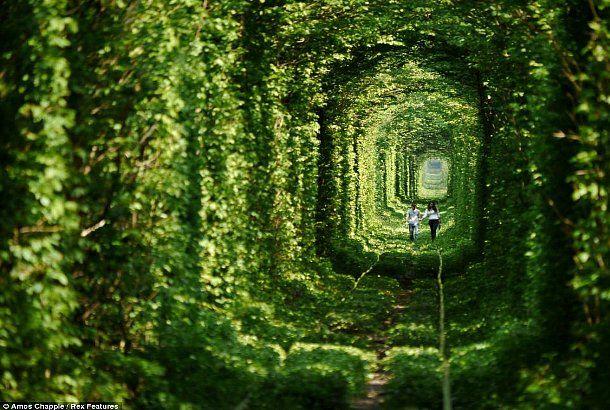 手をつないで、君と歩きたいんだ、愛のトンネル | roomie(ルーミー)