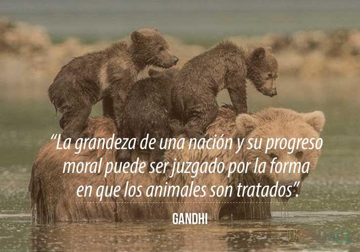 La Grandeza De Una Nación Y Su Progreso Moral Puede Ser Juzgado Por La Forma En Que Los Animales Son Tratados