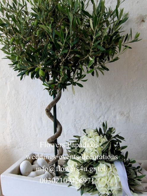 Γάμος στον Αγιο Κοσμά Ελληνικού   Flowers Papadakis θέμα ΕΛΙΑ ! διακόσμηση -επιμέλεια -οργάνωση γάμου Dimitris Papadakis   Flowers Papadakis est 1989   weddings events decorations   διακοσμήσεις γάμων δεξιώσεων  info@flowers4u.gr  www.flowers4u.gr  Ζησιμοπουλου  91 Π.Φαληρο  Τ 2109426971