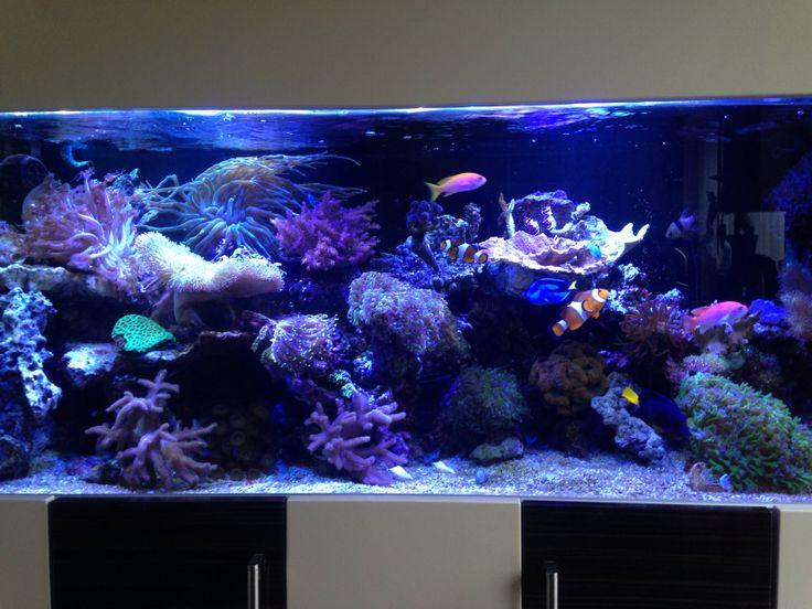Aquarium sps lps corals marine fish tanks