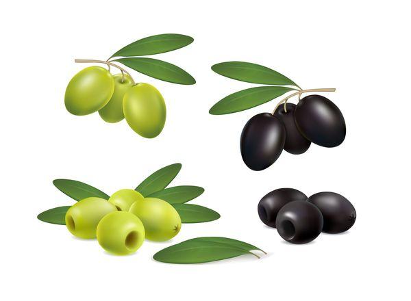 set olives on white background vector
