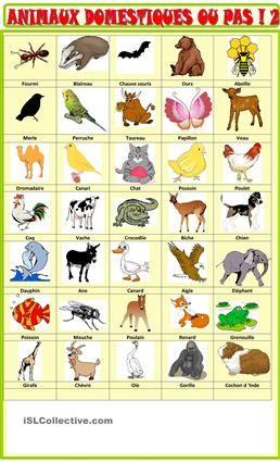 Voici quelques imagiers  pour permettre à vos élèves de réviser ou d'apprendre le vocabulaire des animaux, sauvages ou domestiques, oiseaux , insectes, et vous les exploiter en expression orale , vous pouvez changer ce que vous voulez - Fiches FLE
