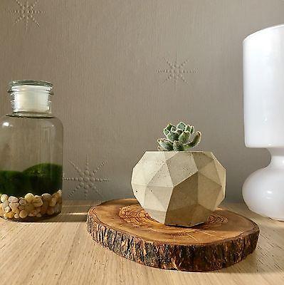 Concrete planters / pots    eBay