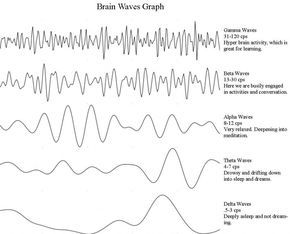 In this article, you w79thill read about the different brain wave types (Theta, Delta, Alpha, Beta, Gamma, Lambda and Epsilon waves) and learn about binaural beats and brainwave entrainment.