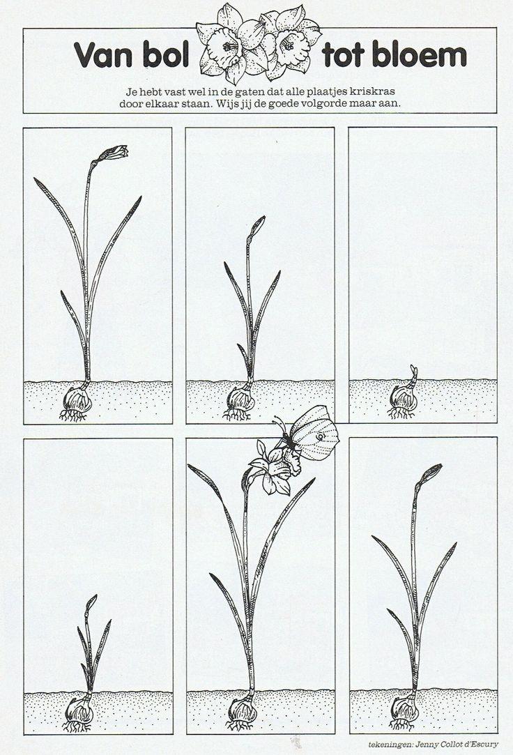 Van bol tot bloem