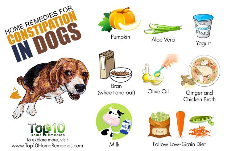 home remedies for constipation in dogs