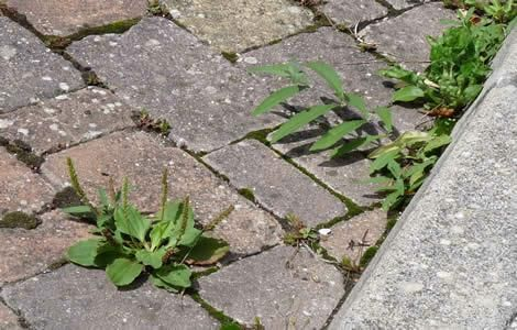 SE DÉBARRASSER DES MAUVAISES HERBES sur le bord du trottoir et les interstices des dalles de béton (bio et bon marché) : dissoudre 1 kg de sel dans 2 l d'eau, dès que le sel est presque dissous, ajouter 3 l de vinaigre. Cela fait 5 l d'anti-herbes pour 1€. Il tue toutes les plantes sauf les arbres et arbustes.