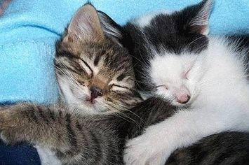 A hug can mean a lot of different things, especially when you're just a kitten. These fuzzy little dudes shared their innermost thoughts with us for this special look inside the hearts of kitte....