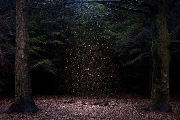 英国のマルチメディア―ティスト、エリー・デイビーズは、英国の森に潜む神秘の世界に魅せられて7年間にわたり写真を撮り続けている。彼女の目には英国の森は魔女に魔法がかけられたような幻想的世界となる。