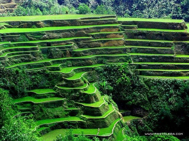 The rice terraces outside Banaue, Philippines.  Jordan and I spent a few days here in October, 2013