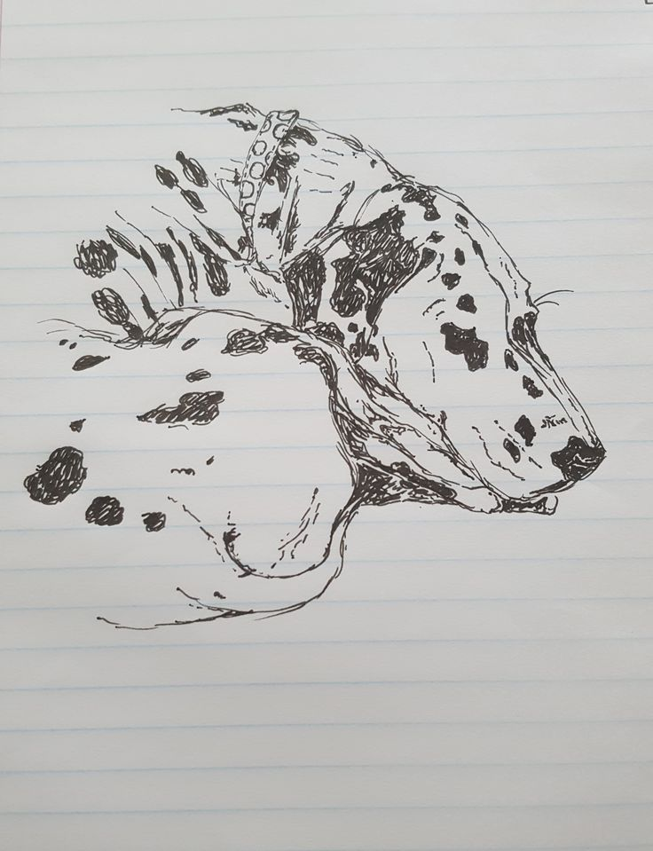 Sleeping Dalmatian ink sketch