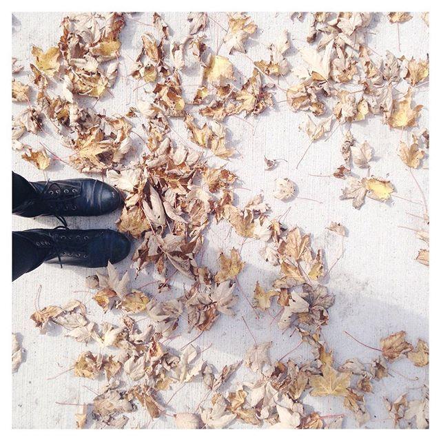 All the foliage 🍃🍂🍁
