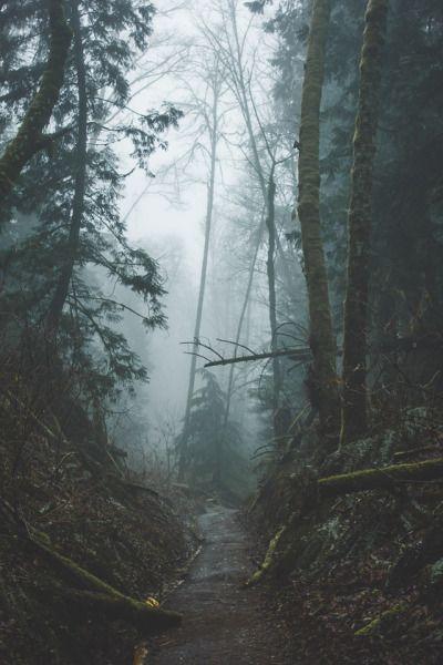 Bosque Vesánico Mediodía