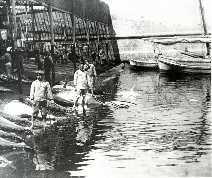 Francesco Paolo Michetti (Tocco da Casauria, 4 agosto 1851 – Francavilla al Mare, 5 marzo 1929): Favignana 1907