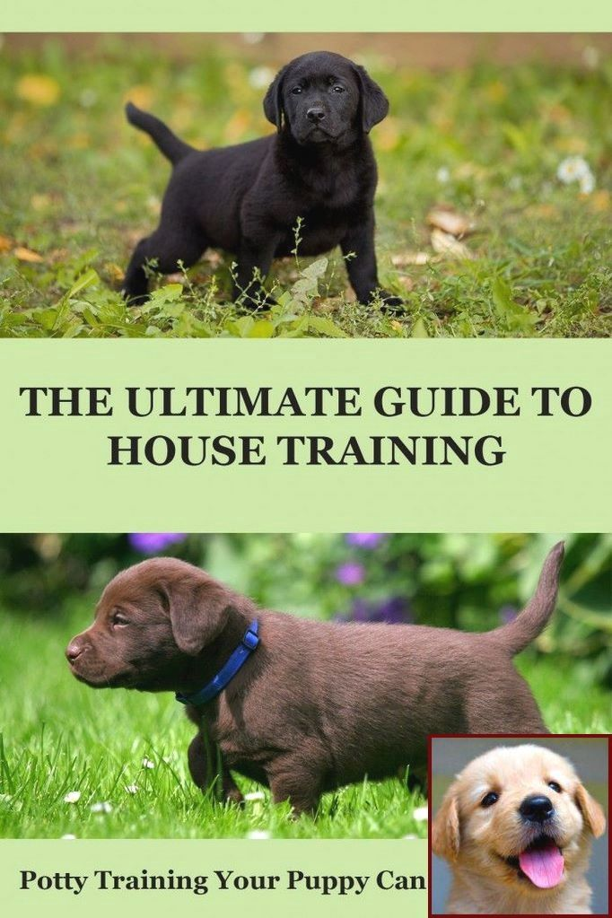 1 Have Dog Behavior Problems Learn About Youtube Dog Behavior Problems And Dog Training Courses Ch Potty Training Puppy Puppy Training House Training Puppies