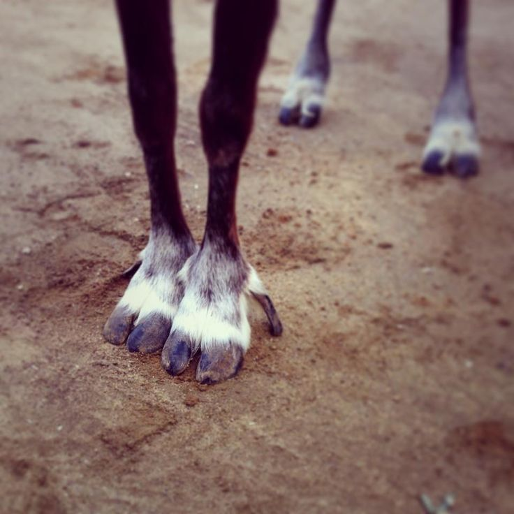 1000  images about paws claws hooves  u0026 talons on pinterest
