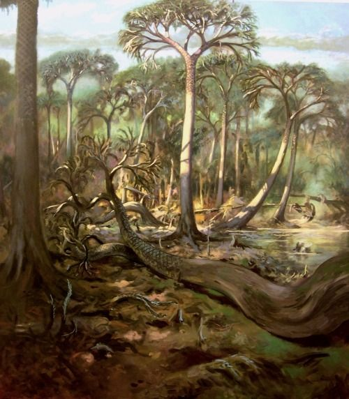 Lepidodendron In A Carboniferous Period Forest By Emiliano Troco Prehistoric Plants Laminas Y Me Gustas