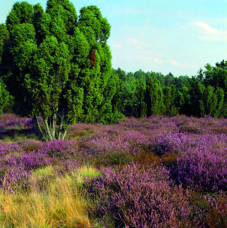 Besuchen Sie uns im Herzen der Lüneburger Heide.