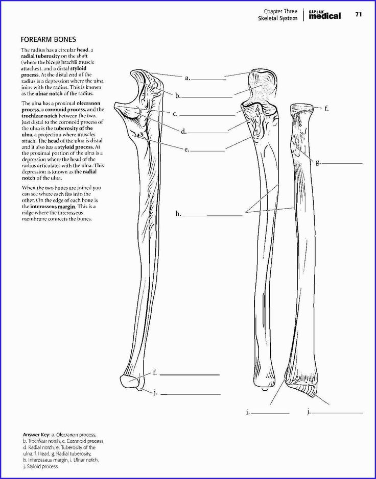 25 Best Of Anatomy Coloring Book Pdf in 2020   Anatomy ...