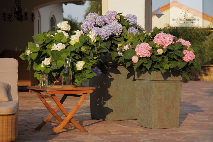 Mit nur zwei bis drei Hortensien der Endless Summer® Collection verwandelt sich die Terrasse zur Wohlfühloase.