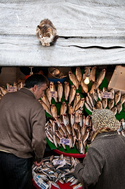 Out on a hunt, Fish Market, Istanbul