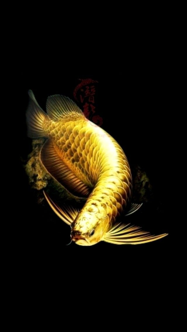 Amazing Golden Arowana Asian Arowana Also Known As Dragonfish Is One Of The Worlds Most Expensive Aquatic Creature In 2020 Aquarium Fish Dragon Fish Tropical Fish