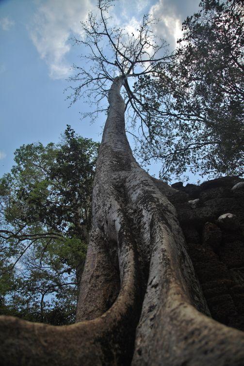 Bantey Samrè (photo: ludovico maria gilberti)