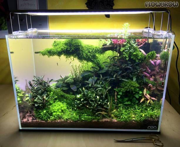 10 Tips on Designing a Freshwater Nature Aquarium | Interior Design Ideas Now