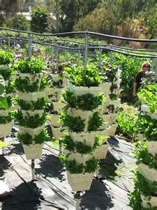 This is one crazy vertical garden - www.facebook.com/Homegrownandhappiness