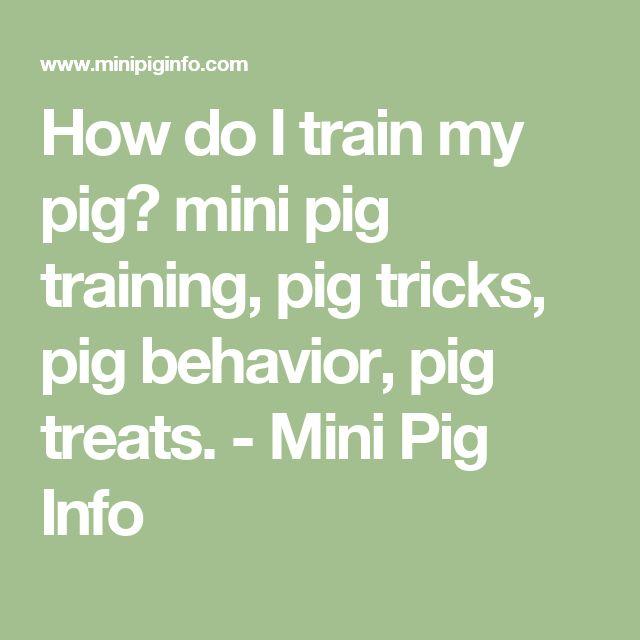 How do I train my pig? mini pig training, pig tricks, pig behavior, pig treats. - Mini Pig Info