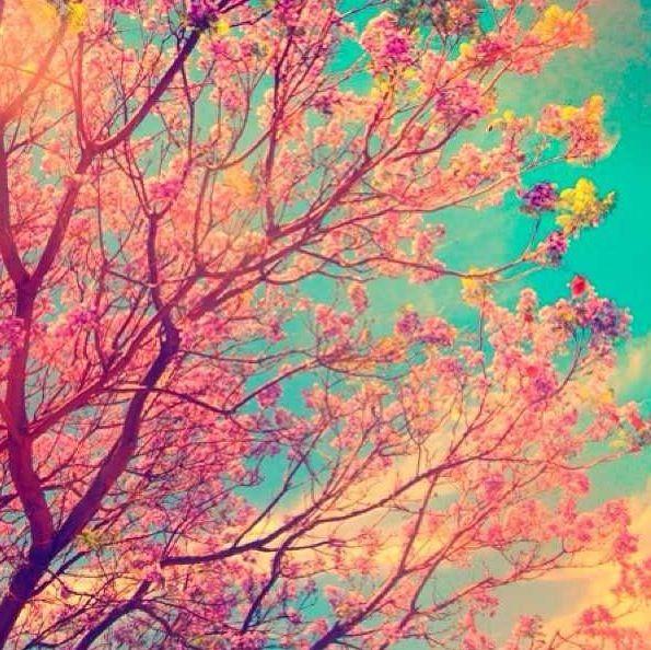 Trees Mexico City