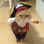 Cats are ringing a bell to get thier foods | Gif Finder – Find and Share funny animated gifs