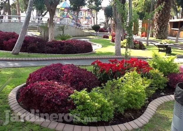 Dise o de jardines plantas pasto jardiner a for Diseno jardines sin pasto