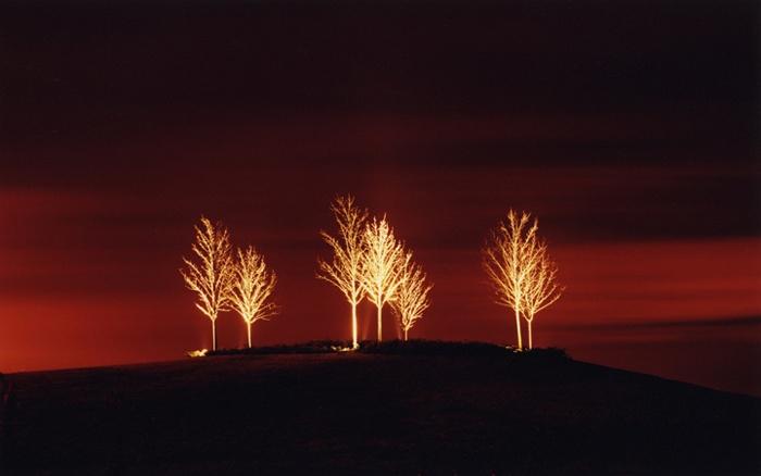 Marcus Doyle - Seven Trees
