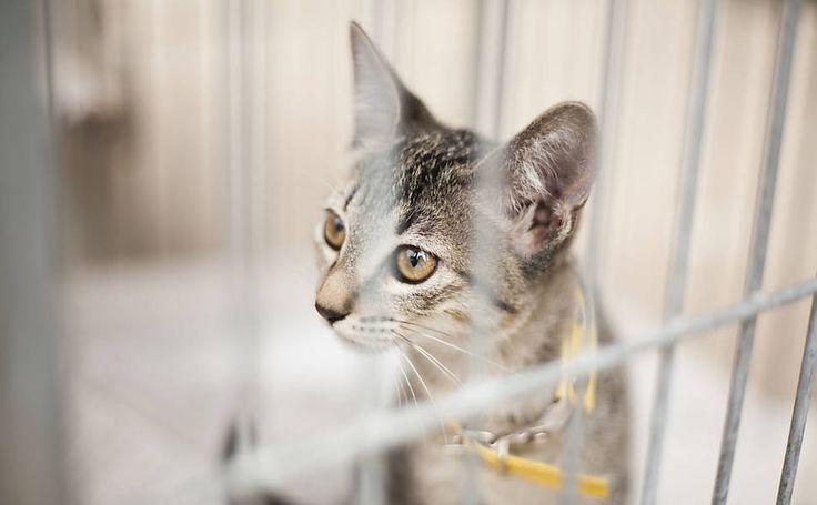Rescued kitten @ adoption fair in São Paulo
